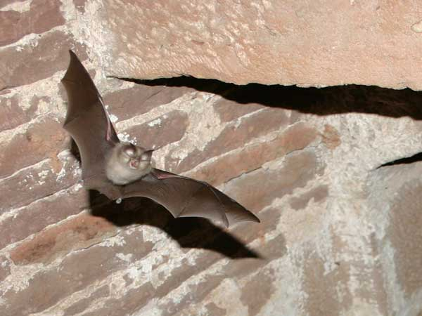 Bat Survey (2)