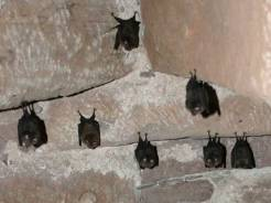 Bat Survey (3)