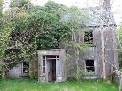 Bat Survey Ireland (28)