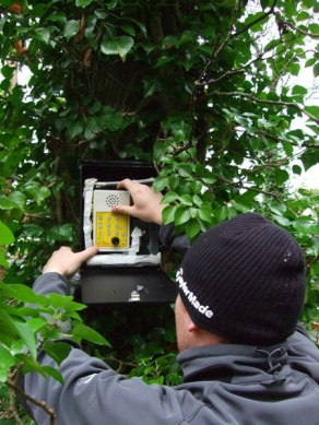 Bat Surveys Ireland