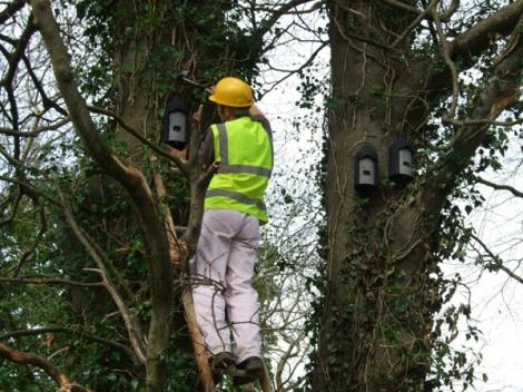 Bat Survey Ireland (32)