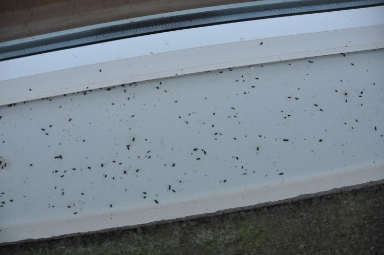 Bat droppings on window ledge at the subject house